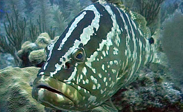 whatisGrouper