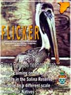 flicker19Thumb